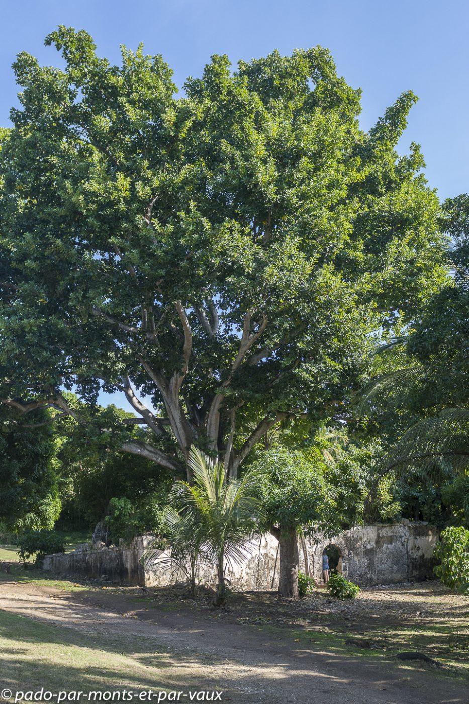 2021- Guadeloupe-Petit-Canal-prison-Banyan