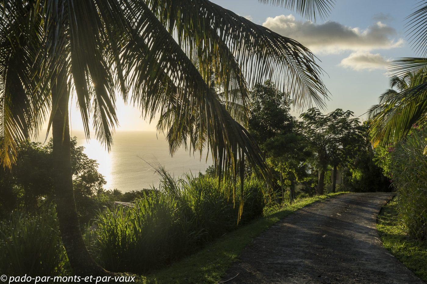 2021- Basse-Terre - hauteurs de Pointe Noire