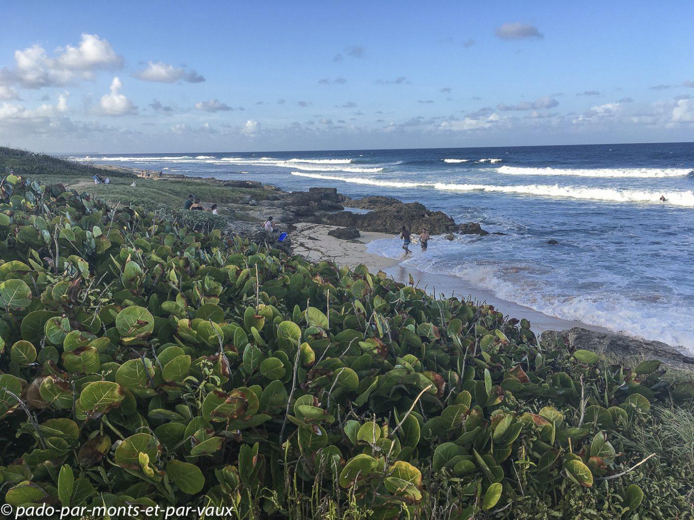 2021-Guadeloupe- Anse Salabouelle