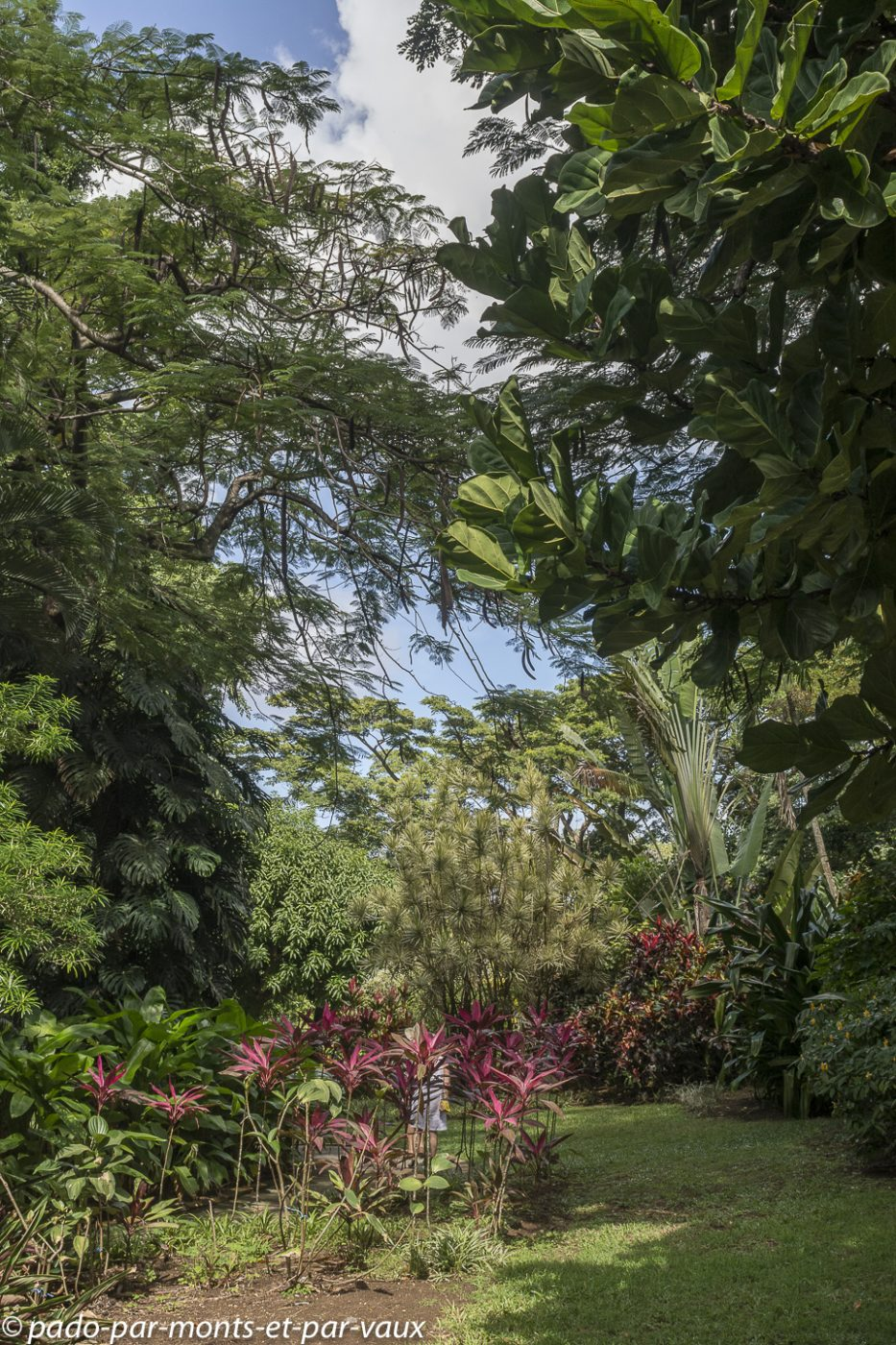 2021- Jardin Deshaie