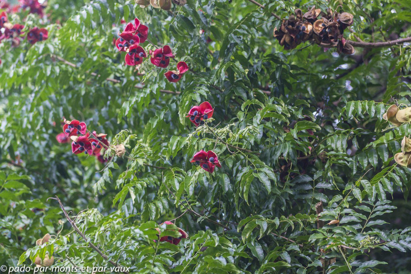 2021- Jardin Deshaie- Perle de Zanzibar