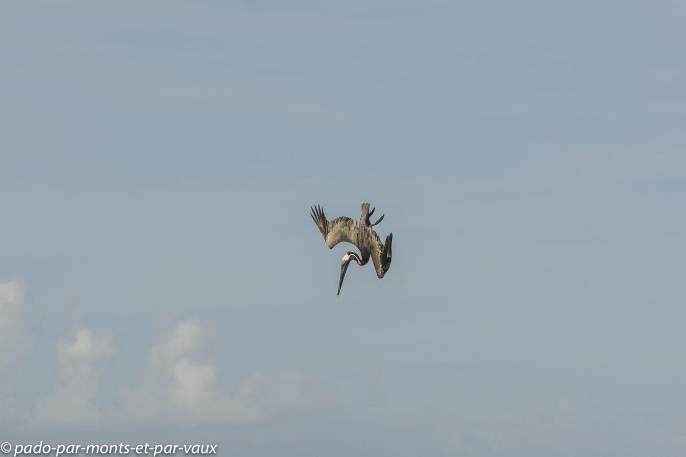2021- Rando-pointe-allegre-Pelican brun